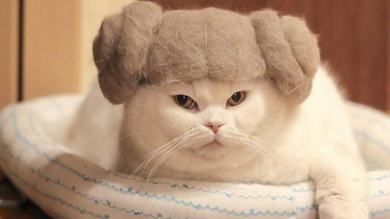 4fd08c183338 Αυτές είναι οι πιο cult γάτες του κόσμου και έγιναν viral ...